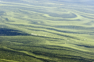 Algae Swirls