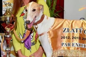 2_Zlatý_chrt_Vuitton_Greyhound_Park_Motol_Praha