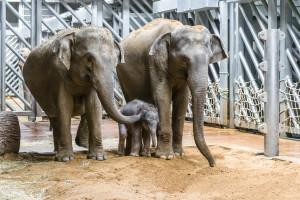 Slùnì slona indického s Janitou a Tamarou