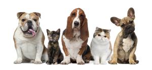 Psi-a-kočky