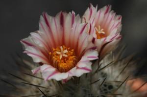 výstava_kaktusů_1