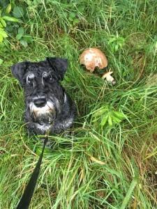 Heidin_Eda_se_v_Beskydech_ukázal_jako_skvělý_houbař