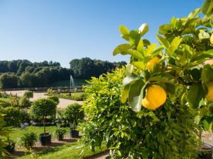 Großsedlitz zahrada