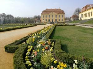 jaro v Großsedlitz