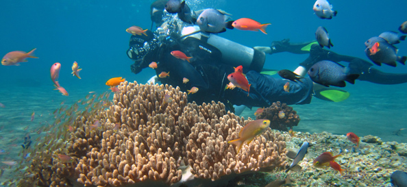 Corals_in_Hikkaduwa