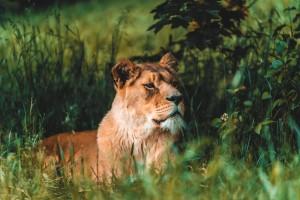 Safari_Dvur_Kralove