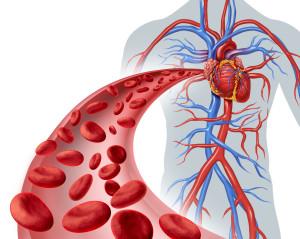 Krev_tekuty organ