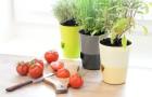 Soutěž o vouchery na samozavlažovací květináče a truhlíky