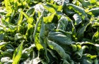 Ovoce a zelenina, základ dobré imunity