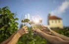 Rulandské modré – poznejte víno mnoha tváří: 18. 8. 2020