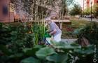 Botanicula spojuje generace a přináší nadechnutí v zeleni uprostřed města