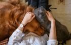 Vědci vysvětlují skrytá rizika změn charakteru ročních období na zdraví domácích zvířat