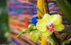 Pestrý svět orchidejí se opět představí ve skleníku Fata Morgana. Expozice přiblíží rostlinné bohatství a extrémy jihoamerického Ekvádoru